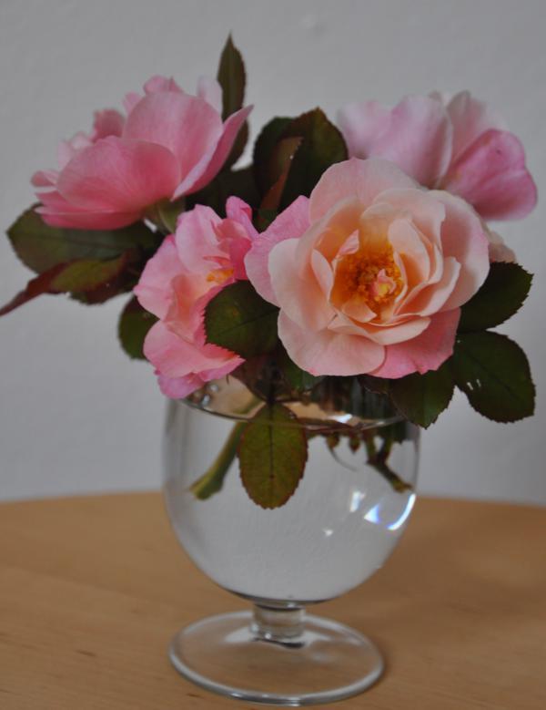 Rose-di-novembre.jpg
